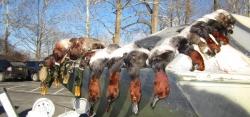 125730102-h-ducks-canvasbaacks-010914-600