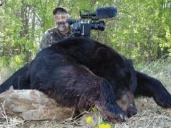 bill-bear