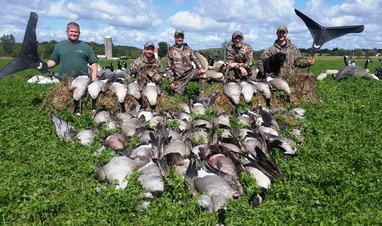 125644231-h-geese-willis-0914-600