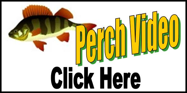 Ice Fishing Perch Video Tag 2016-150