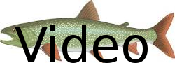 watch lake trout fishing video