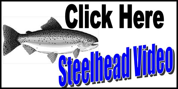 Steelhead Video Tag 2016-150