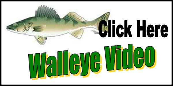 Walleye Video Tag 2016-150