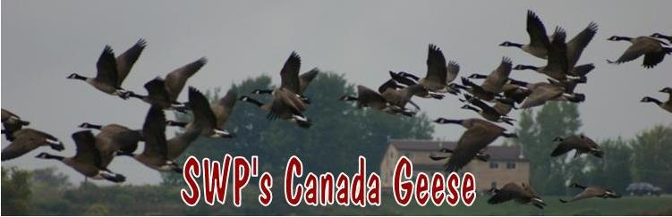 SWP canada Geese