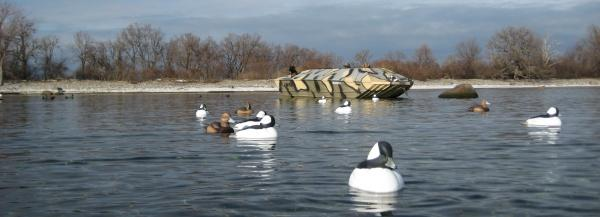 Diving Ducks Bull Whistlers (goldeneye) and other Diving Ducks are best encountered during the months of November and December.  These hearty birds are impervious to cold weather and are challenging ducks to hunt. These birds were taken during the 1st week of December. Diving duck hunters enjoy our gunning from our custom float rigs.  Our boats are the standard by which all others are judged.