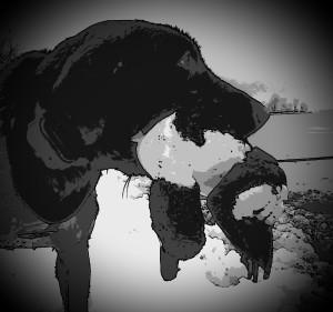 H Action Tart with Whistler Black&White 1214
