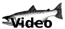 Click Above for Salmon Video